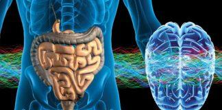 intestino segundo cerebro