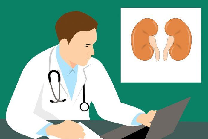 Día Mundial del Riñón, por la prevención de las enfermedades renales