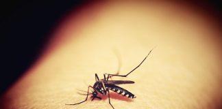 """¿Estamos ante una """"mega epidemia"""" de dengue debido al cambio climático?"""