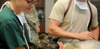Secretaría de Salud de Michoacán aplicará más de 400 mil dosis contra la rabia a perros y gatos