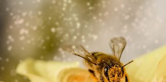 """La FAO llama a defender a las abejas, """"aliadas claves"""" en lucha contra el hambre"""