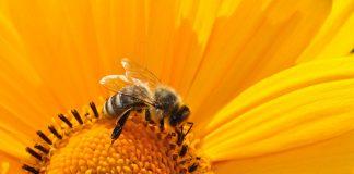 Alumno de la FES Cuatitlán crea un extractor de veneno de abejas que no las daña
