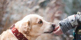 La tenencia responsable de mascotas exige modificar tu estilo de vida