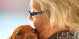 Vínculo emocional con mascota amortigua estrés psicológico en cuarentena