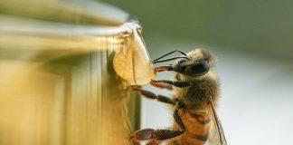 Radiación de redes inalámbricas contribuye a la muerte de insectos