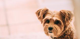 La importancia de enfocarse en la salud animal, la salud humana y la salud ambiental no puede ser exagerada, dado que la rabia es totalmente prevenible