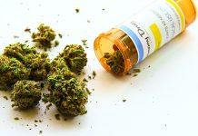 La Secretaría de Salud elabora reglamento para uso medicinal de cannabis