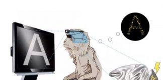 Un implante podría ser la respuesta a la ceguera
