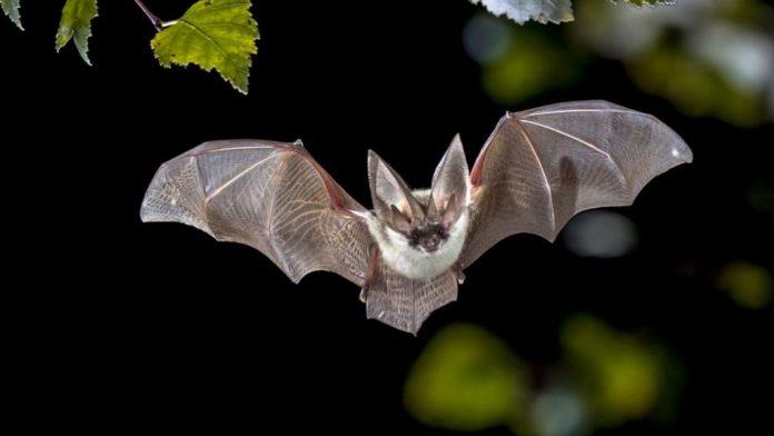 Científicos estudian cómo prevenir próxima pandemia con murciélagos