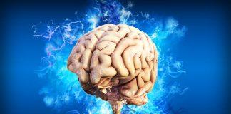¿Dónde vive el estrés en el cerebro? investigadores lo explican