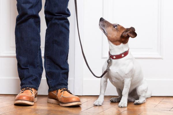 Dueños comparten riesgo de desarrollar diabetes con sus perros, revela estudio