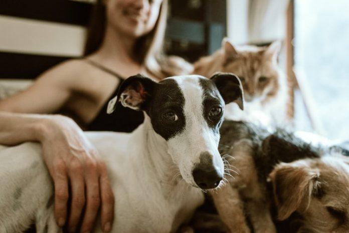 Mascotas no son riesgo de transmisión de COVID-19, explica la Secretaría de Agricultura