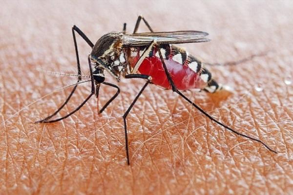 Científicos descubren químicos que matan al parásito de la malaria