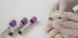 UNAM está probando en animales vacuna covid mexicana