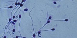Científicos cuestionan si es real el descenso del recuento de esperma humano a nivel mundial