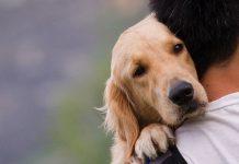 Algunos beneficios a la salud de tener un perro