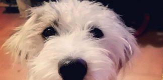 Algunos beneficios de tener un perro, según Harvard