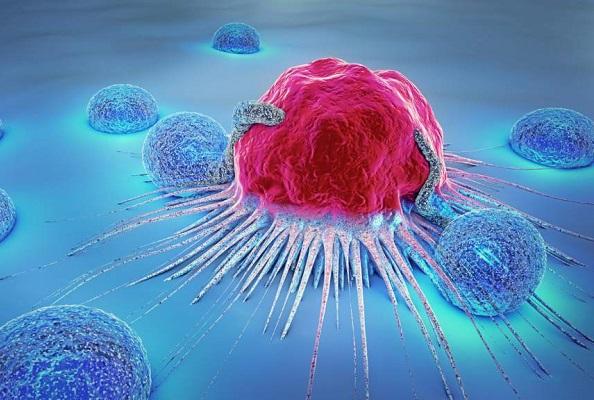 Encuentran proteína que permite dividir todos los tipos de cáncer en dos grupos