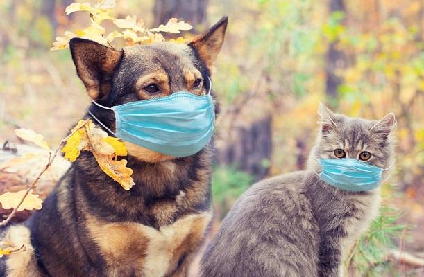 Gatitos y perritos no contagian de COVID-19 a humanos, apunta la UNAM