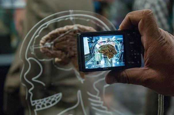 Hallan claves de conexiones que vuelven único al cerebro humano